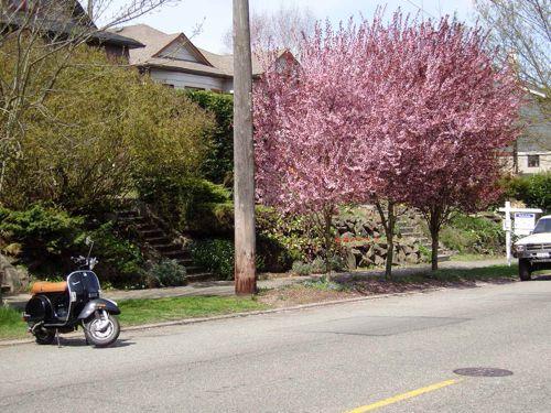 PX under the cherry tree