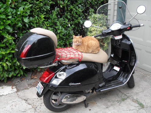 I can has scooter