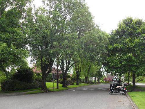 Laurelhurst neighborhood trees